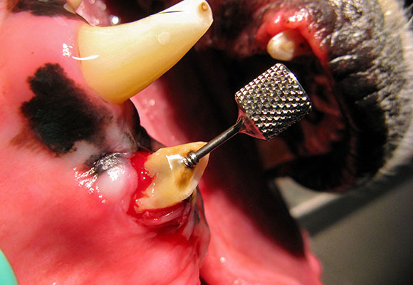 Get a grip on your extractions